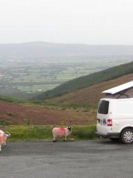 Sheep and Campervan
