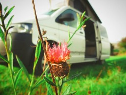 Van and thistle