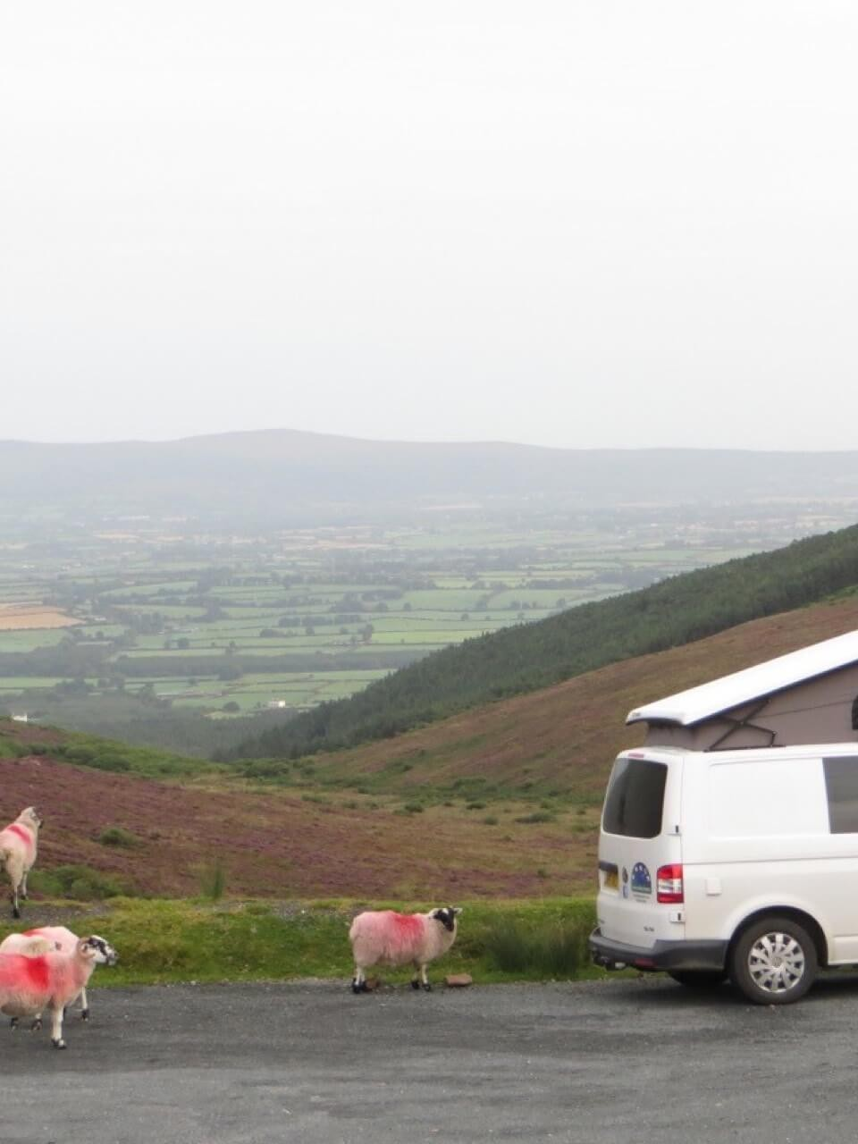 Sheep and van campervan hire