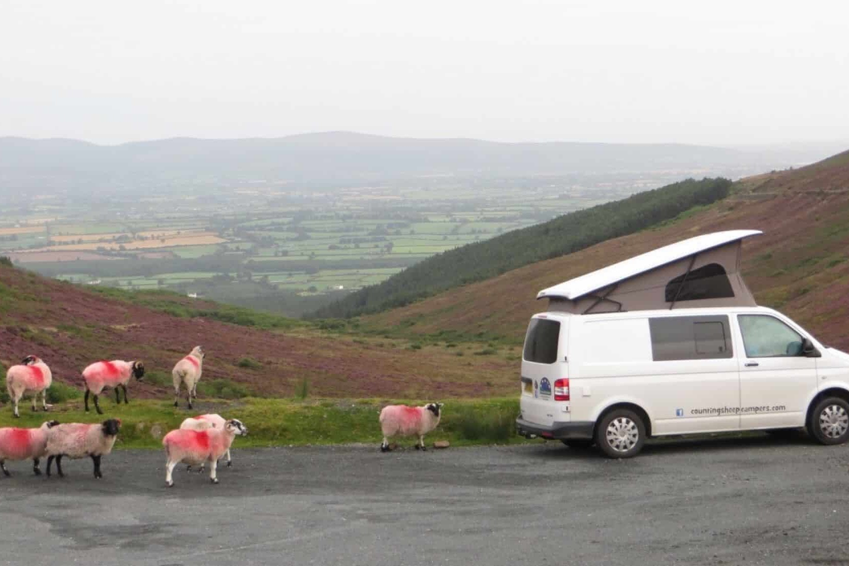 Sheep and Campervan hire