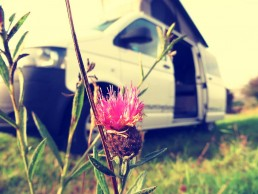 Van and thistle campervan hire