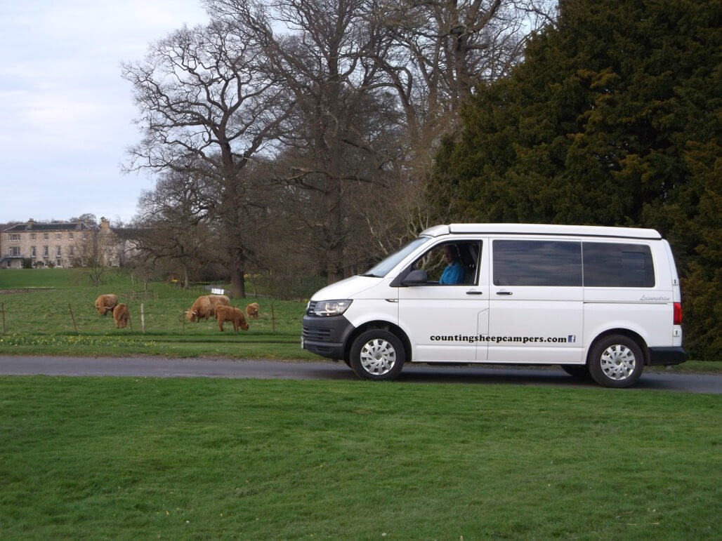 highland cows and sandy camper van hire