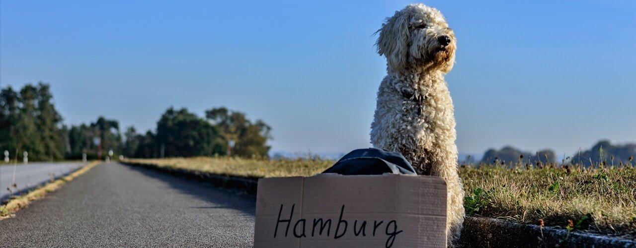 Dog health checklist